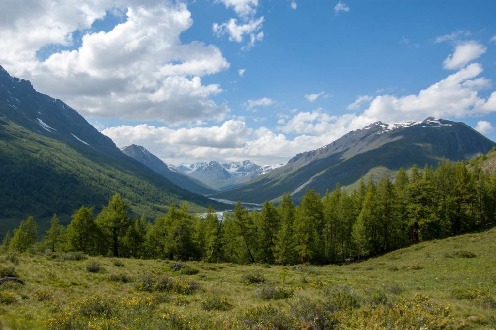 (Main) Forest and frozen river at altai mountains-2