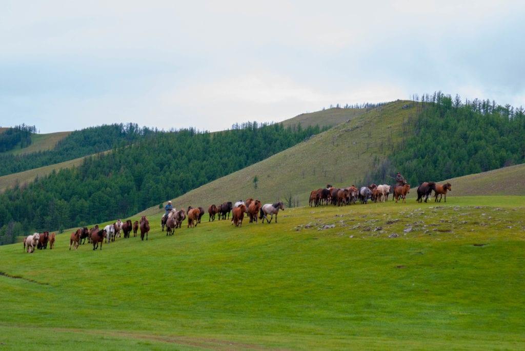 (main pic)Ar Khangai herding horses